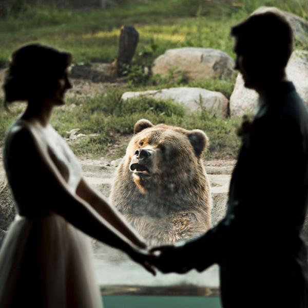 bear photobombs wedding2 5b9a064dc6634 700