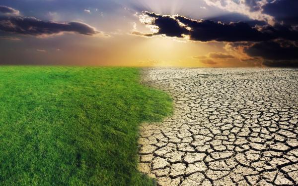 green grass and cracked desert