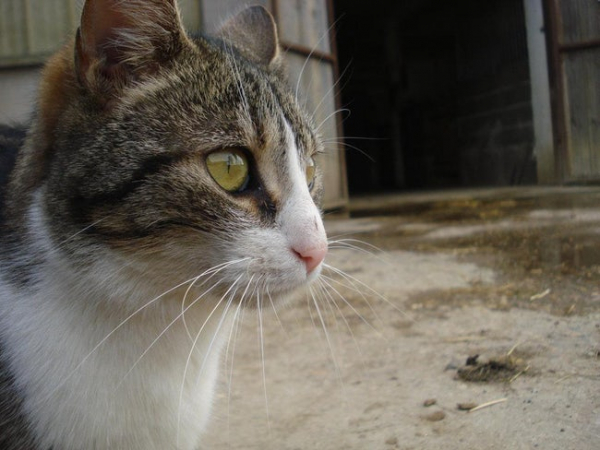 misele a french farm cat trekked 9 miles to an unfamiliar town to visit her owner in the ho photo u1