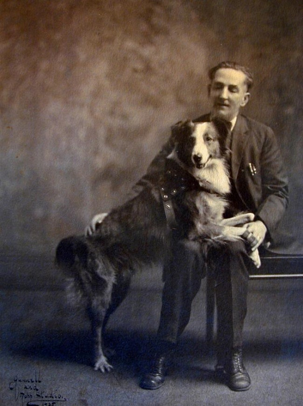 bobbie the wonder dog traveled 2 551 miles from indiana to his master s home in oregon photo u1