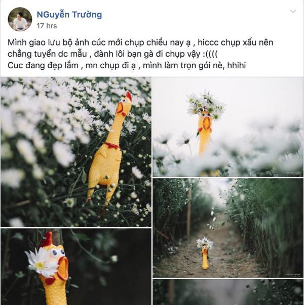 Bộ ảnh 'gà nhựa hốt hoảng bên cúc hoạ mi' của nhiếp ảnh gia ế khách khiến dân mạng cười đến mệt mỏi