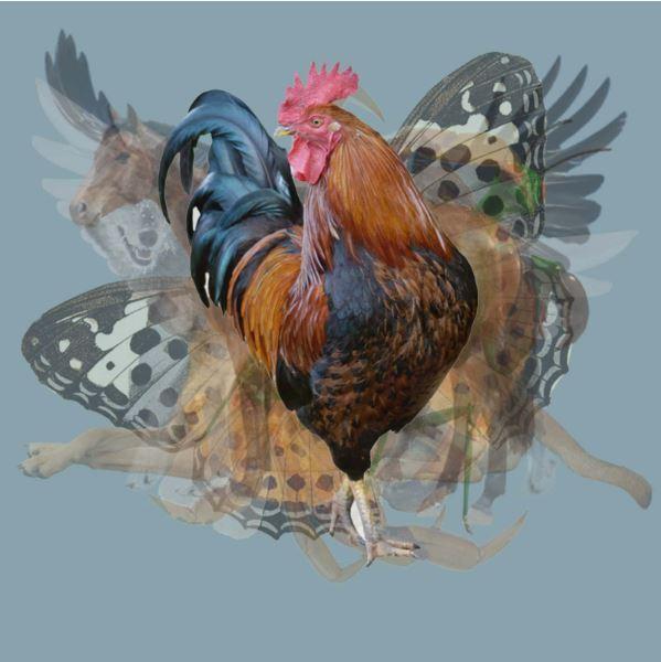 Loài vật đầu tiên bạn nhìn thấy trong bức tranh sẽ tiết lộ những điều ẩn sâu trong tính cách của bạn