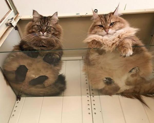 Muốn nhìn thấy 'bộ mặt thật' của bọn mèo, hãy mua ngay một tấm kính!