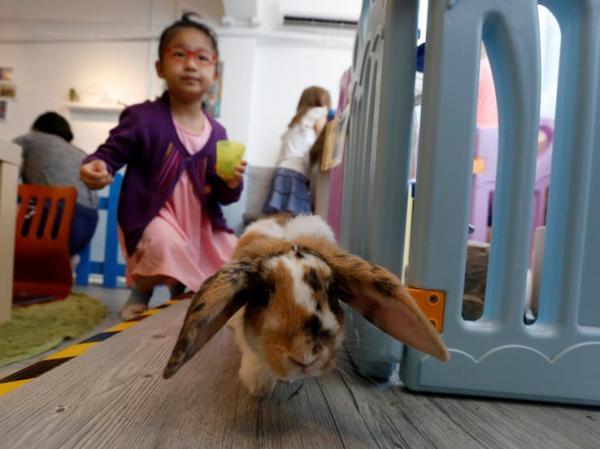 rabbitland in hong kong