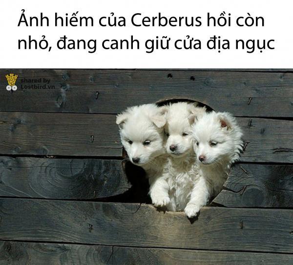 cerberus puppy 01