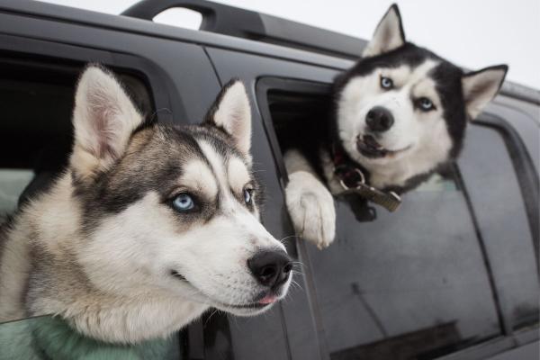 Anti-vaxxer từ chối tiêm chủng phòng bệnh cho chó mèo vì sợ thú cưng... tự kỷ