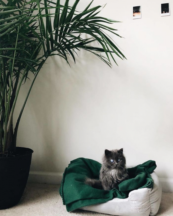 Merlin – chú mèo mù có kích thước chỉ bằng chai nước nổi đình đám cả Twitter