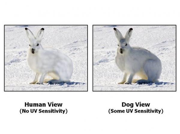 Chó và mèo có thể nhìn thấy những thứ mà mắt người không thể thấy được