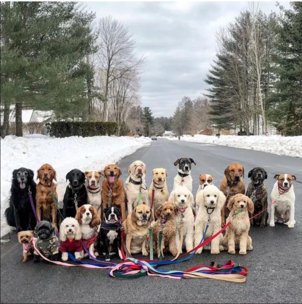 Dịch vụ dắt chó đi dạo chính là điều các 'sen' bận rộn đang ao ước