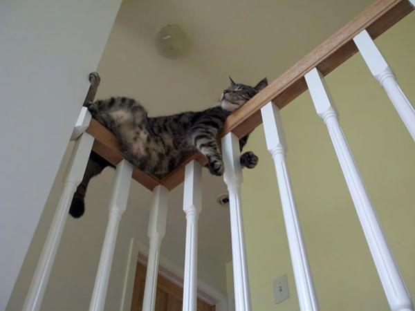 Chùm ảnh chứng minh loài mèo có thể ngủ trong cả những tư thế kì lạ nhất