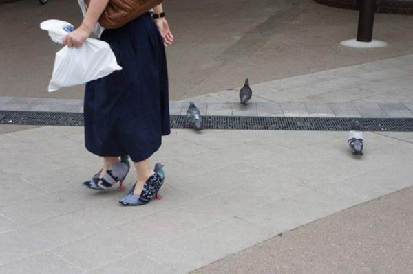 Nhật Bản lại tạo trend mới: Giày cao gót bồ câu siêu tinh xảo còn lừa được cả bồ câu thật luôn nhé!