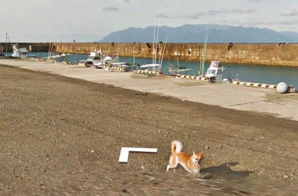 lost bird chu cho duoi theo google street view 13