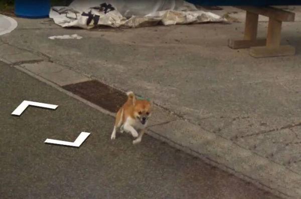 lost bird chu cho duoi theo google street view 5