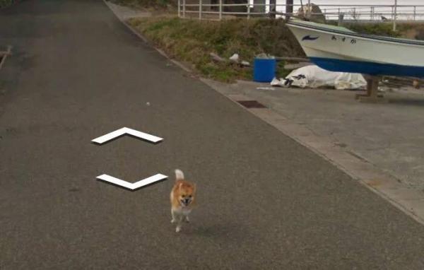 lost bird chu cho duoi theo google street view 6