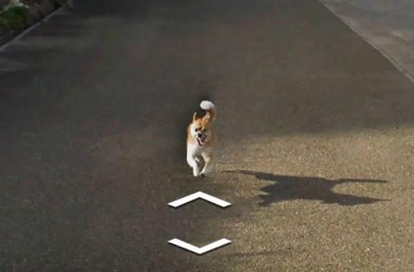 lost bird chu cho duoi theo google street view 7