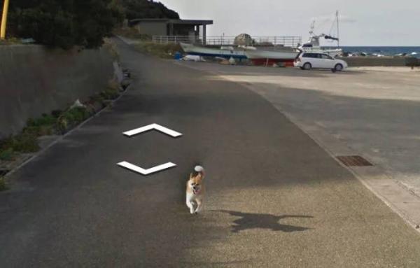 lost bird chu cho duoi theo google street view 8
