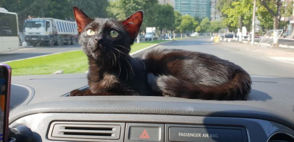 we fought one year to save our adopted black kitten shuri 5c7ce74bb9a74 700