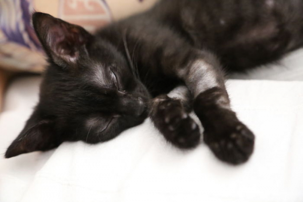 we fought one year to save our adopted black kitten shuri 5c7cf819f00e0 700