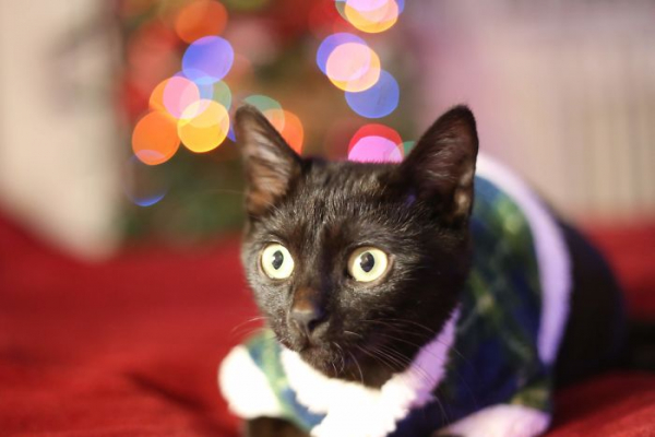 we fought one year to save our adopted black kitten shuri 5c7cfc8379397 700