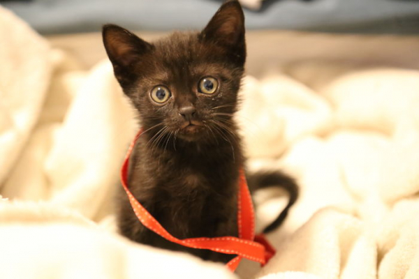 we fought one year to save our adopted kitten 5c7cd1bb4266b 700