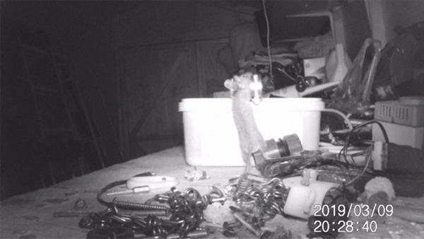 mouse tidying garden shed night pensioner discovered stephen mckears 5c91f998097e4 700