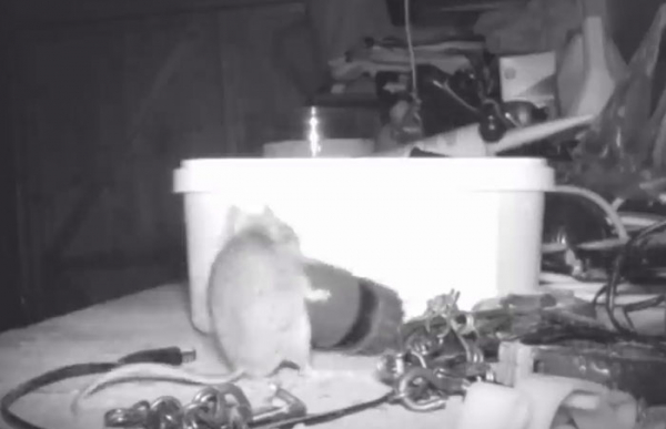 mouse tidying garden shed night pensioner discovered stephen mckears 9 5c91f53b11fe8 700