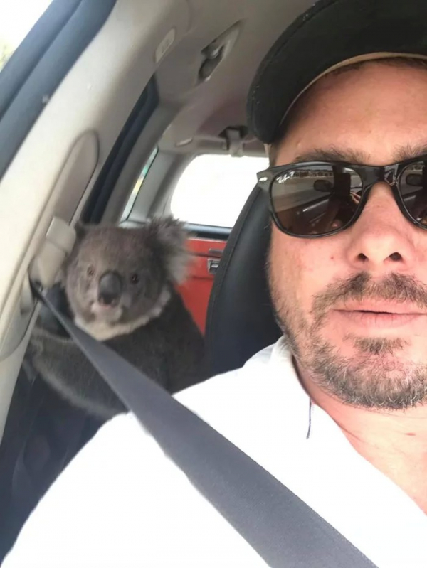 lost bird koala dot nhap vao xe hoi de huong may lanh 2