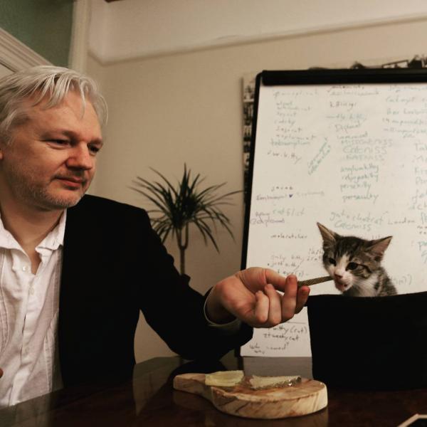 Bị bắt giữ, ông trùm WikiLeaks còn kịp tìm người nhận nuôi mèo cưng để nó không bị vạ lây