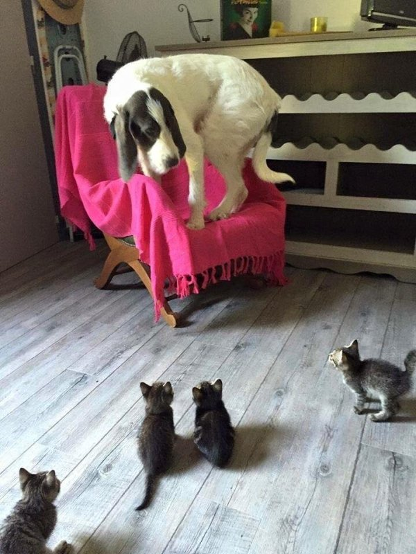 too many pets gallery24