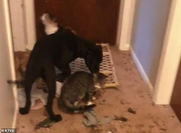 Cảnh sát ập vào trại cứu hộ động vật và khám phá ra sự thật kinh hoàng