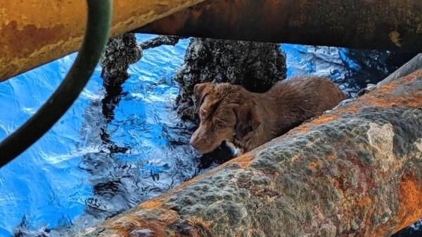 Giàn khoan giữa biển khơi mênh mông, bỗng bắt gặp một chú chó bơi lạc