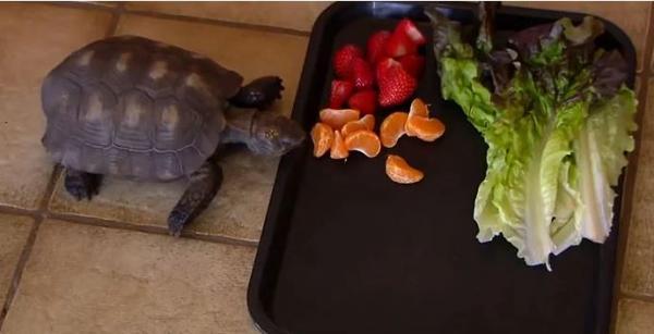 Cô bé người Mỹ được bố tặng chú rùa năm 10 tuổi nào ngờ mình có thể sống cùng thú cưng gần 6 thập kỷ