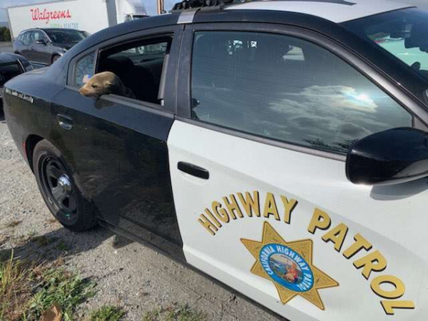 Bắt giữ 'tên tội phạm' siêu dễ thương làm ùn tắc giao thông trên xa lộ nước Mỹ