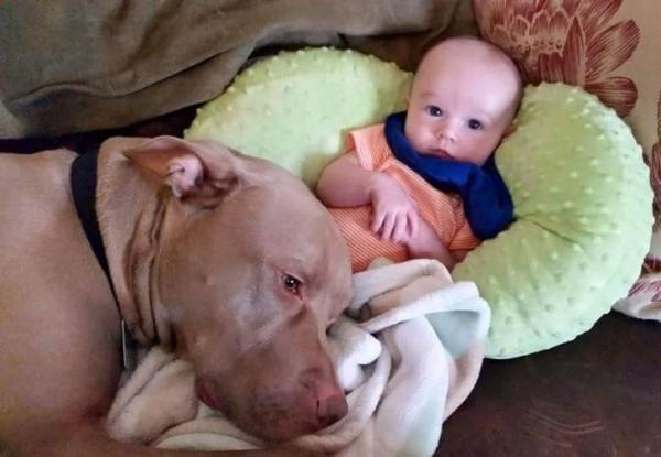 20 hình ảnh chứng minh thú cưng là 'người bảo vệ' tốt nhất cho trẻ nhỏ