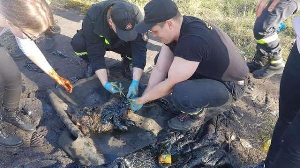 Giải cứu chú chó nhỏ bị chôn sống nửa người nhưng vẫn kiên trì sủa lớn cầu cứu