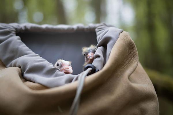Nhiếp ảnh gia trẻ tuổi khiến mọi người ngạc nhiên với bộ ảnh về tình bạn giữa chó và vịt