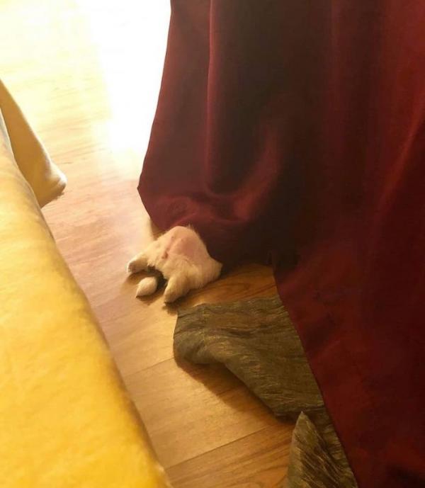Chú chó con 'đánh cắp trái tim' cư dân mạng với dáng ngủ 'sập nguồn' siêu cấp đáng yêu