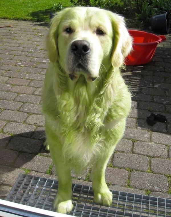 18 hình ảnh chứng minh khả năng 'phá sóng' tuyệt đỉnh của loài chó