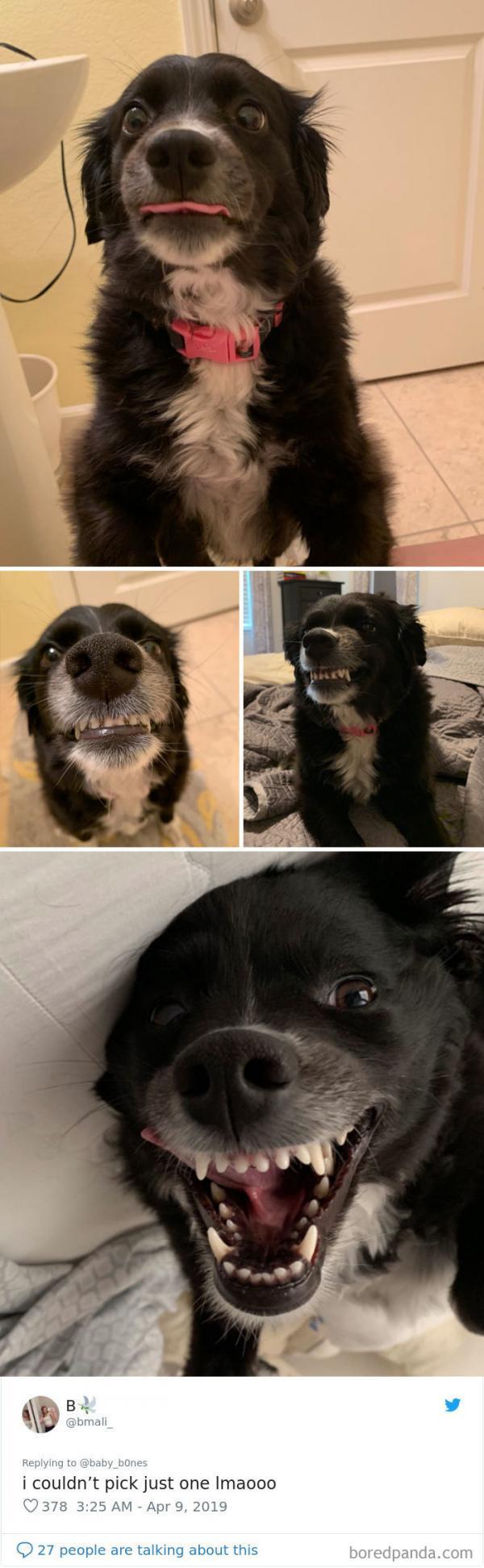 Thức tỉnh đi, thú cưng của bạn không phải lúc nào cũng dễ thương và đáng yêu đâu