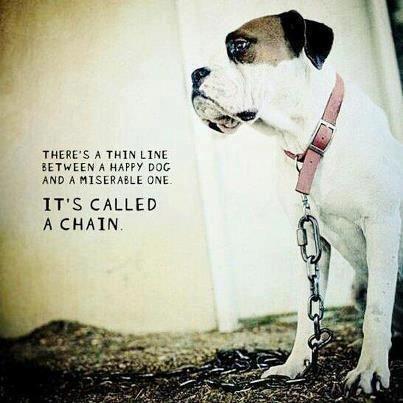 Vì sao không nên xích hoặc nhốt chó trong thời gian dài?