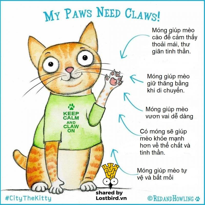 Cắt móng cho mèo có thể gây tổn thương vĩnh viễn và ảnh hưởng đến tính mạng của 'boss'