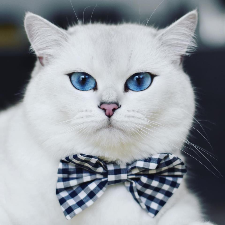 Đôi mắt tan chảy triệu con tim của mèo Coby