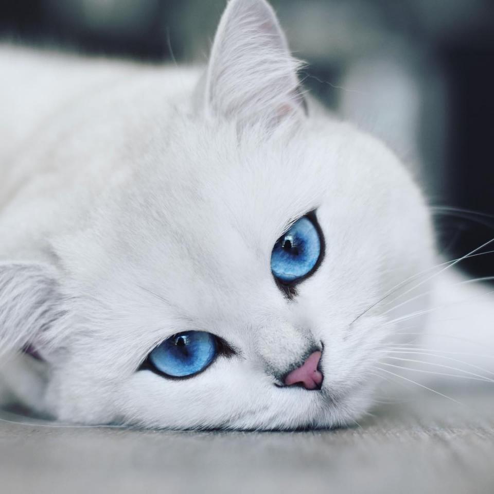 ảnh mèo đẹp