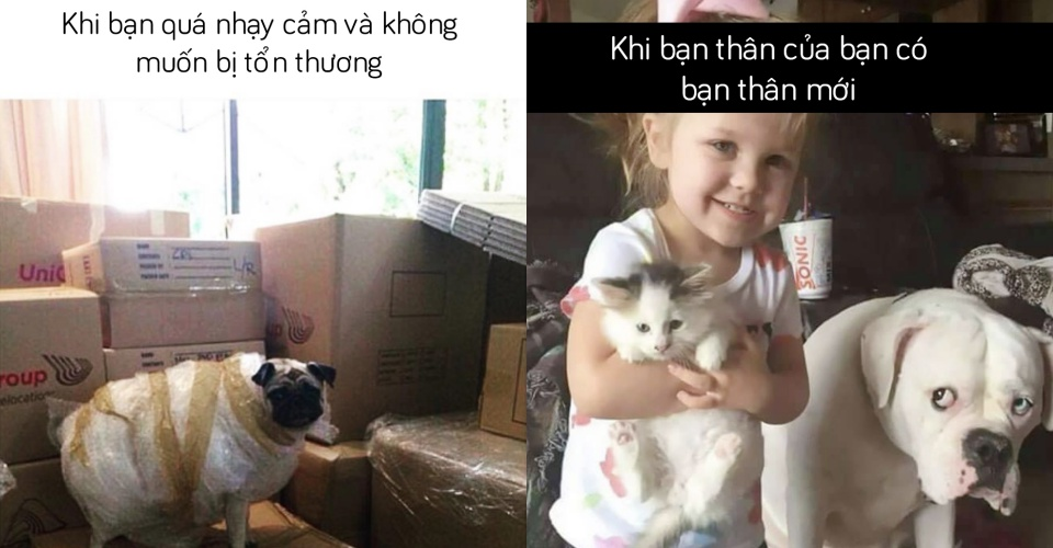 20 ảnh chế về chó mèo đảm bảo sẽ khiến bạn 'cười lăn'