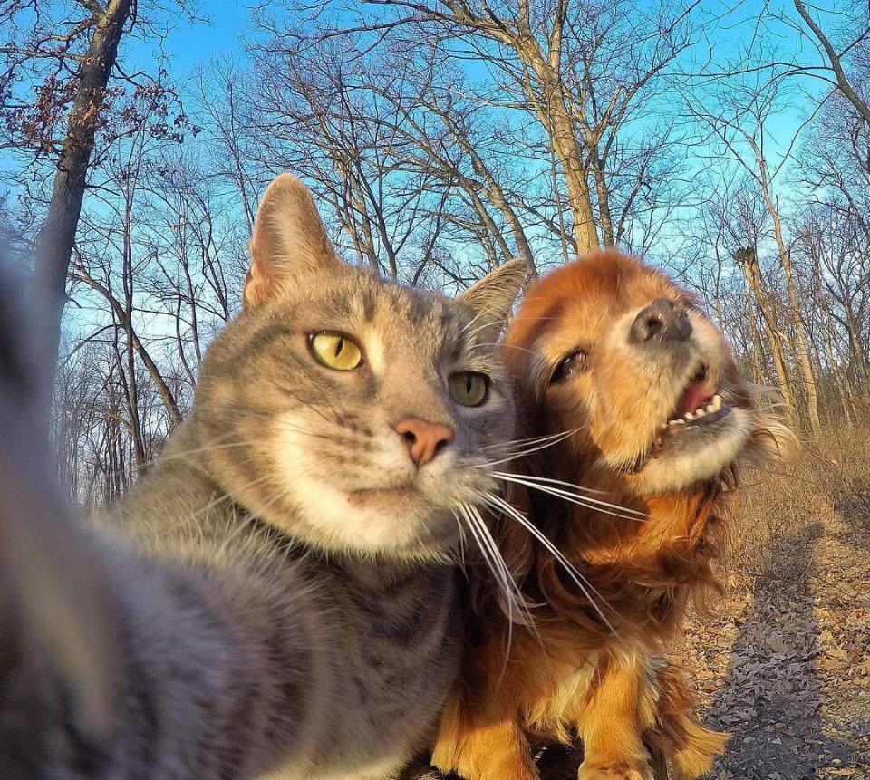 ... Vì không có nhiều bạn bè để selfie, nên Manny thường chỉ chụp ảnh với hội anh em chó Rottweiler của mình.