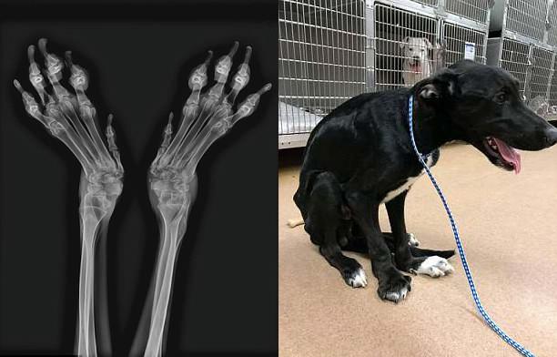 Chú chó có đôi chân biến dạng vì bị nhốt quá lâu trong lồng nhỏ