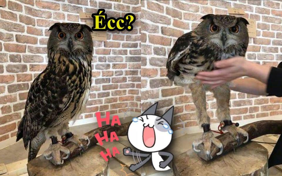Snapchat biến thành thế giới động vật với loạt lời bình 'cười nghiêng ngả' (Kỳ 1)