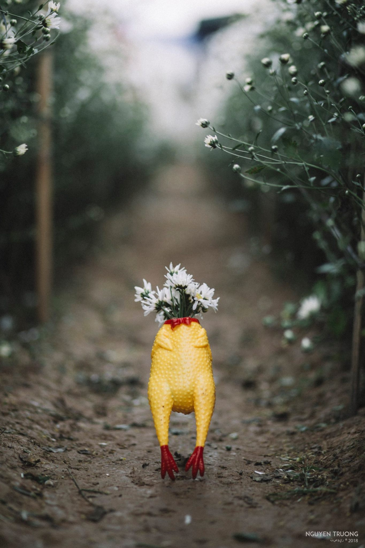 Đầu để trồng hoa là có thật.