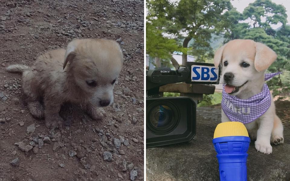Chú cún đáng thương bị bỏ rơi bỗng trở thành 'boss' quốc dân nổi tiếng khắp Hàn Quốc