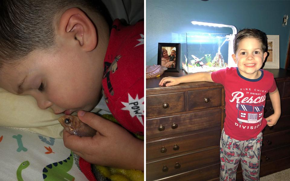 Cậu bé vô tình giết chết em cá vàng vì mang ra khỏi bể để ôm ngủ